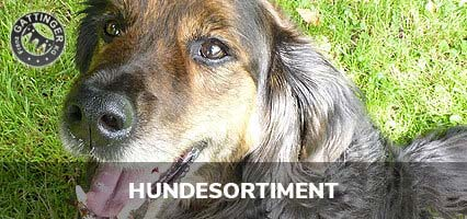 Hundesortiment