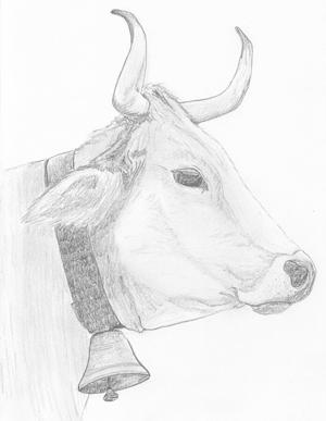 für Rinder