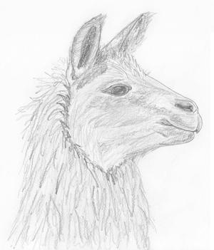 für Lama
