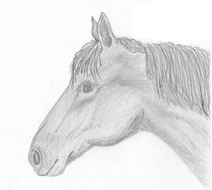 Pferdeschermaschinen