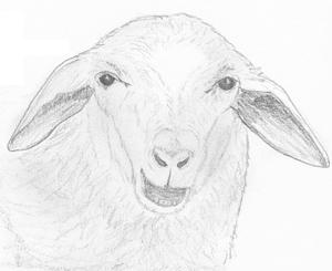 Schafschermaschinen